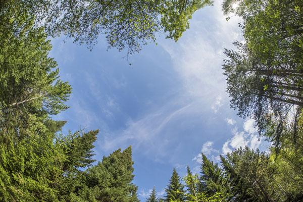 Wald als CO2 Speicher | Umwelt | Birrerholz