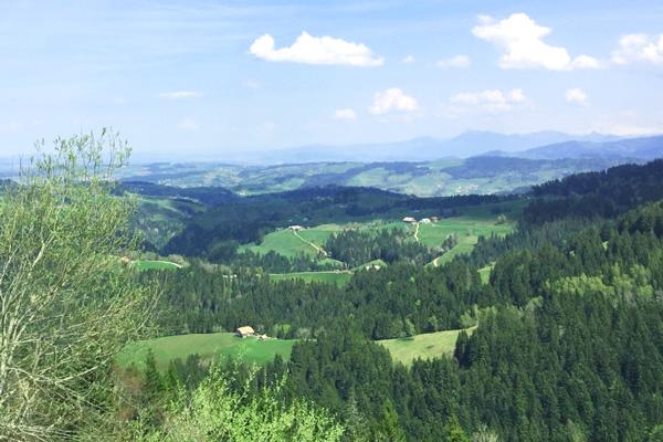 Birrerholz-Schweizer-Wald-Napf